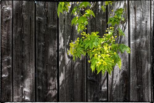 spring pinebarrensnewjerseysouthjerseynature fujix100s