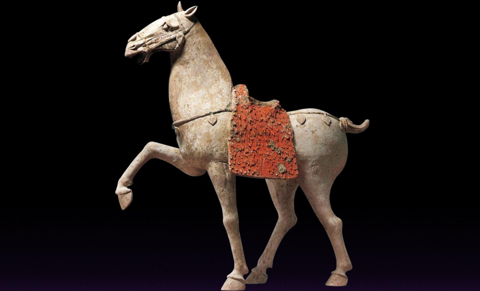 049Equus