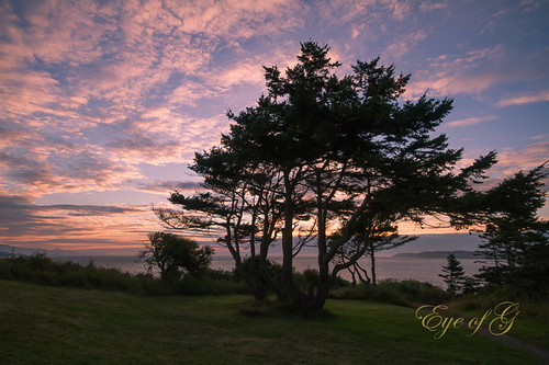 trees sunset usa places whidbeyisland northamerica washingtonstate sunsetsunrise skyclouds fortcasey