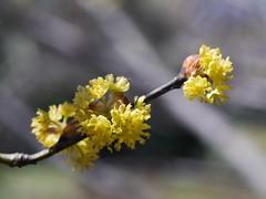 土, 2013-04-06 11:18 - ブルックリン植物園