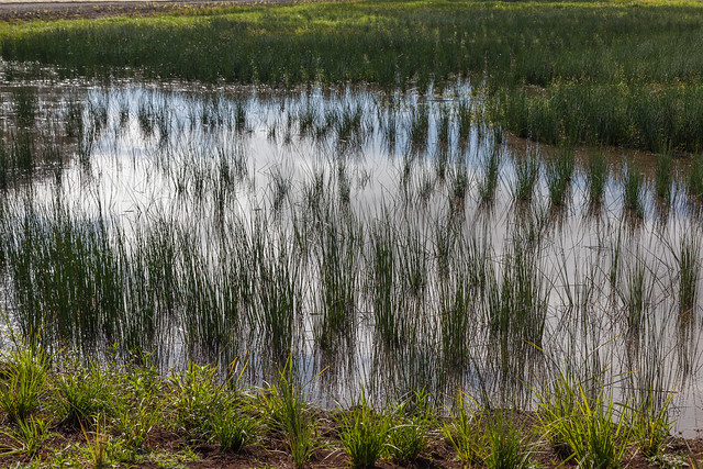 Wetlands Filled With Water From Recent Heavy Rain