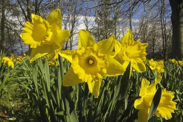 111 of 365 Spring