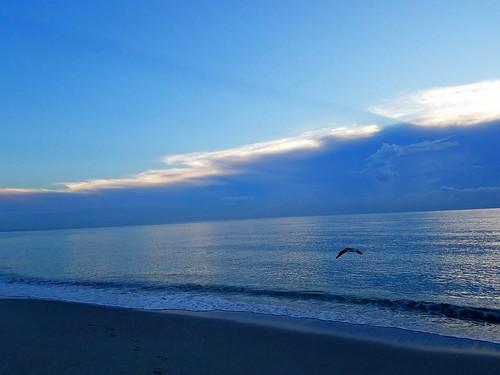 hollywoodbeach beach sunrise seagull ocean florida usa samsungsmg935a samsunggalaxys7edge