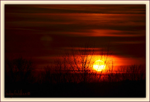 sunsetsuntreesbranchredcloud