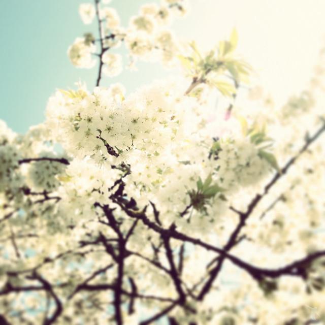 - jungle flowers -