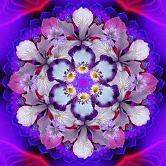 The Love of Purple by Orchid Mandala