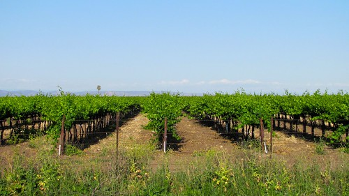 california blue usa brown color green landscape nikon day nikond70s clear dslr distance vinyard grapevines sanjoaquincounty canonsx120 californiascenteralvalley