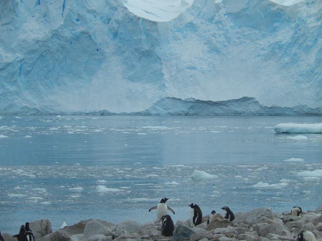 Earthly Paradise, Neko Harbour Antarctica