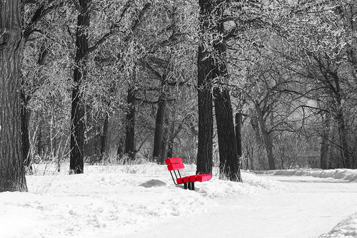 trees winter blackandwhite snow canada monochrome bench lumix spring day winnipeg manitoba explore 1000views selectivecolour cans2s fz200