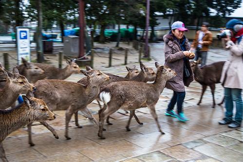 Deer hunt   by Shenghung Lin