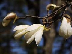 土, 2013-04-06 10:56 - ブルックリン植物園
