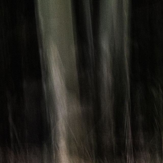 . . . ghost trees