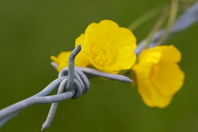 Macro Mondays, Theme - TV Show,  Bouquet of Barbed Wire
