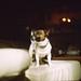 Argentique Photo brute Rolleiflex 3.5 E Kodak portra 800 by Laurent Malléa im@ges