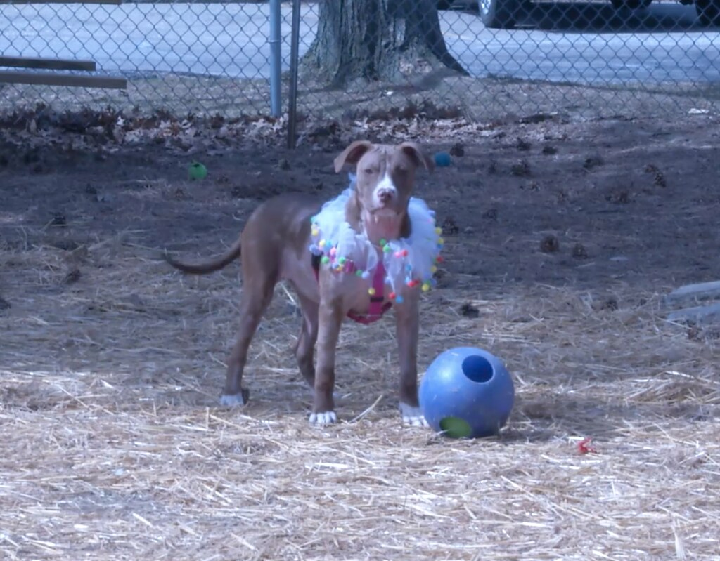 Meridian Township Park Commission Decides to Charge Fee to Enter New Dog Parks