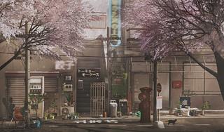 Sakura lane