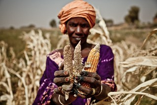 Sahel food crisis 2012: drought response in Mauritania | by Oxfam International