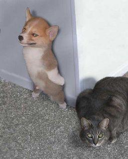 Download 99+  Gambar Lucu Kucing Vs Anjing Paling Lucu HD