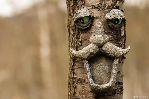tree face deutschland thüringen dof bokeh depthoffield treebeard zellamehlis baumbart