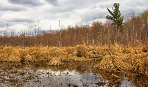 trees reflection clouds landscape raw explore wetlands tonemapped