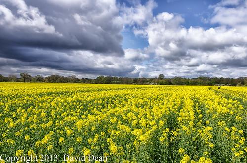 flowers yellow countryside nikon warwickshire rapeseed rapeseedfield alcester d7000 jactoll nikcolorefexpro4