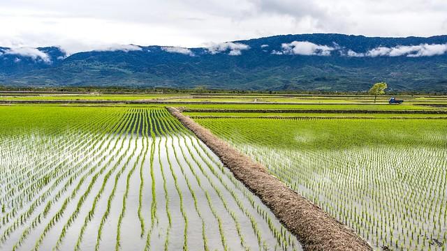 East Rift Valley and Coastal Range
