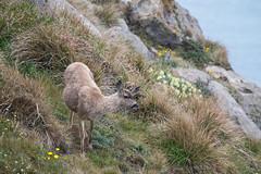 Photograph: A doe, a deer...