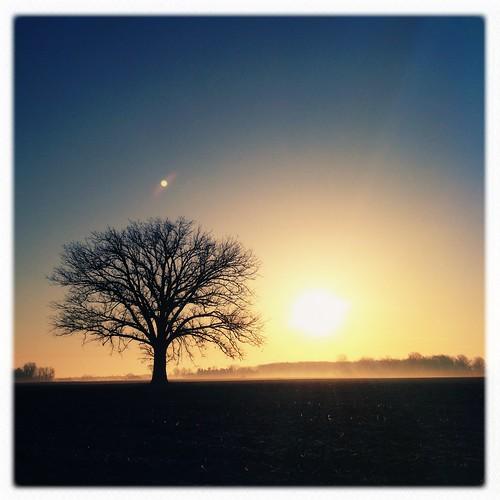 morning light sky sun mist inspiration tree field sunrise spring michigan noflash farmland flare iphone vanessaray puremichigan hipstamatic inas1935film lefoxvintage foxylens