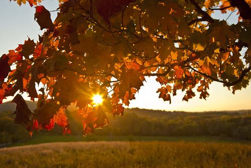 autumn ny newyork tree fall leaves cornwall upstate foliage