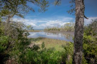 Pine Forest / Salt Marsh On Bogue Sound 10mm