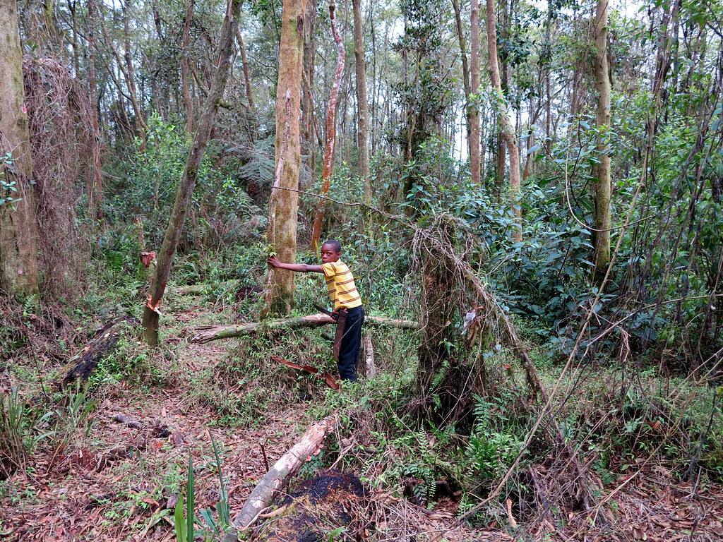 Illegal Tree Cutting - Sierra de Bahoruco national park, H… | Flickr