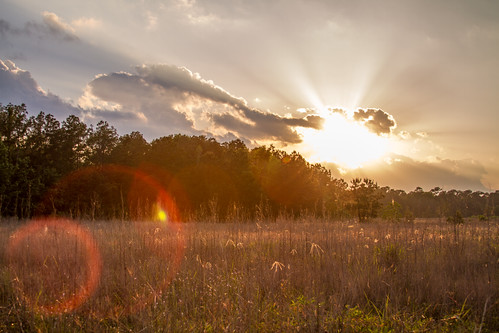 sunset texas meadow lensflare kingwood eastendpark