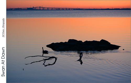 sunrise dawn swan nikon gimp skyway qew queenelizabethway burlingtonbay d7100 nikkor55200mmvr