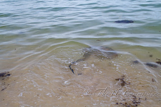 Stingray on fly | by Scott Loudon