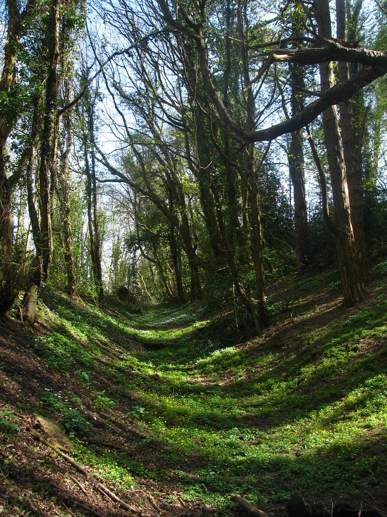 Spring Woodland Shadows