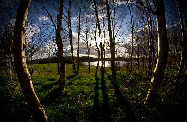Through the trees, the sun.