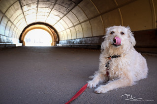 Fuji X100s - The Labradoodle Test | by BrianEden