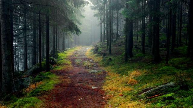 Troll forest II