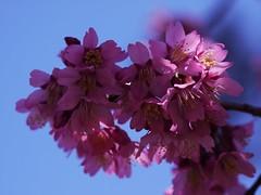土, 2013-04-06 12:10 - ブルックリン植物園