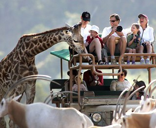 family_safari1 | by Café Africa