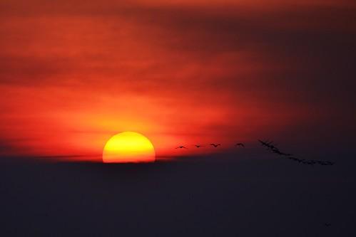 morning sun ontario canada birds burlington sunrise geese nikon d5100