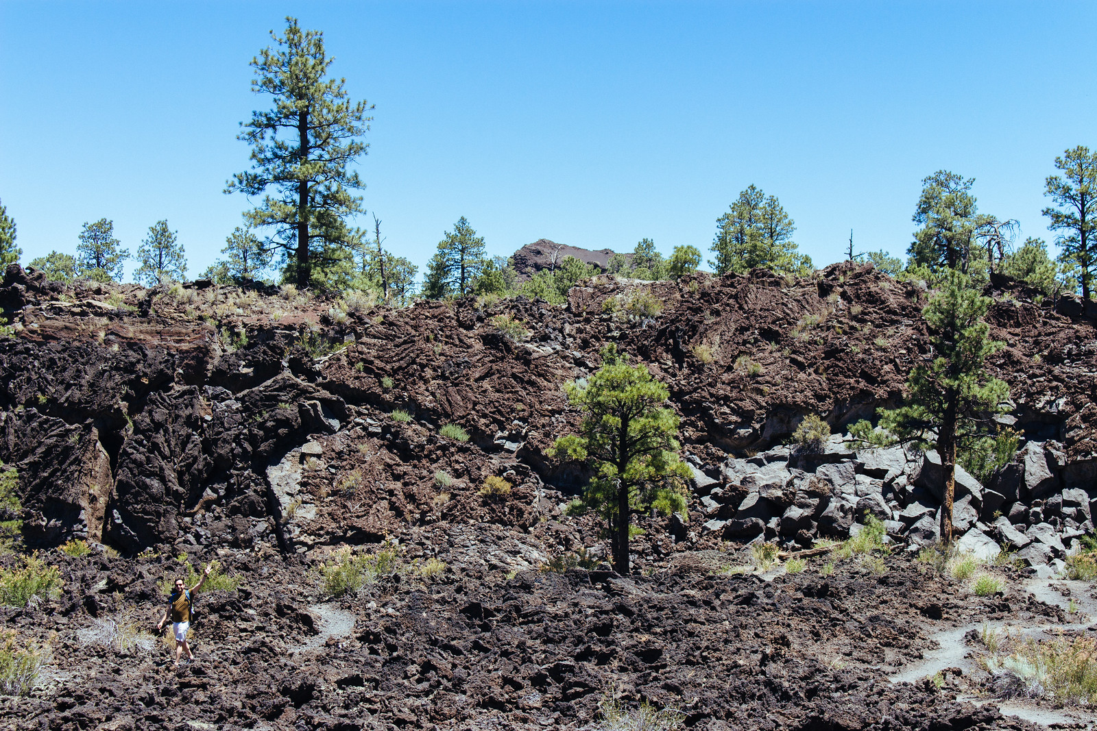 Ponderosa pines grow on top of a wall of dried lava