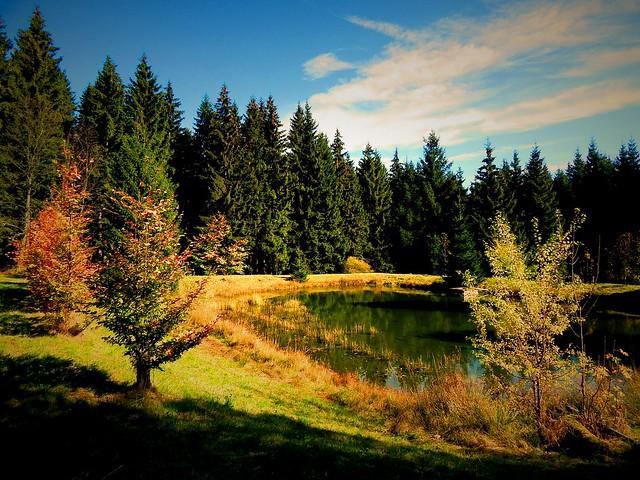 Autumn scene / Herbstszene