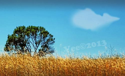 A lone tree   by bluesbby
