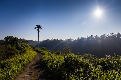 indonesia canon landscape ubud campuhanridge bali sunrise morning palmtree green river canyon
