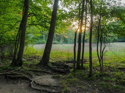 clevelandmetropark huntingtonreservation landscape sunset fall bayvillage ohio unitedstates us