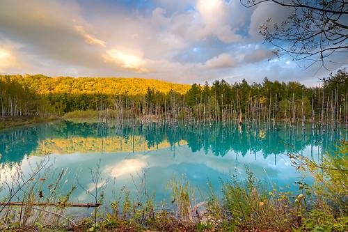 biei hokkaido japan bluepond 北海道 美瑛 白金青池 青池 美瑛白金青い池 白金青い池 青い池