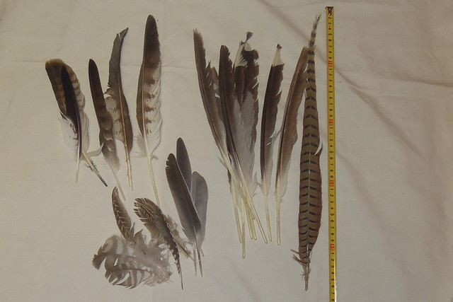 06_feathers