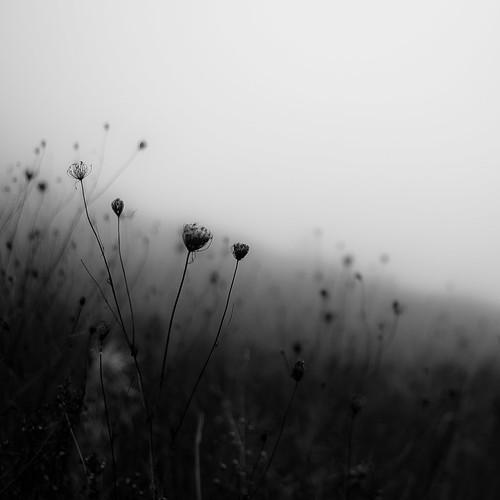d5000 dof nikon abstract autumn blackwhite blackandwhite blur bw depthoffield fog foggy hills landscape light mist misty monochrome natural noahbw prairie quiet shadow shore shoreline silhouette square still stillness lakesidefog