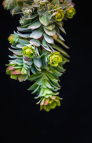 succulents against the planter, Vancouver, BC | by gks18